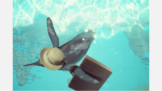 旅行鞄を持って泳ぐペンギン
