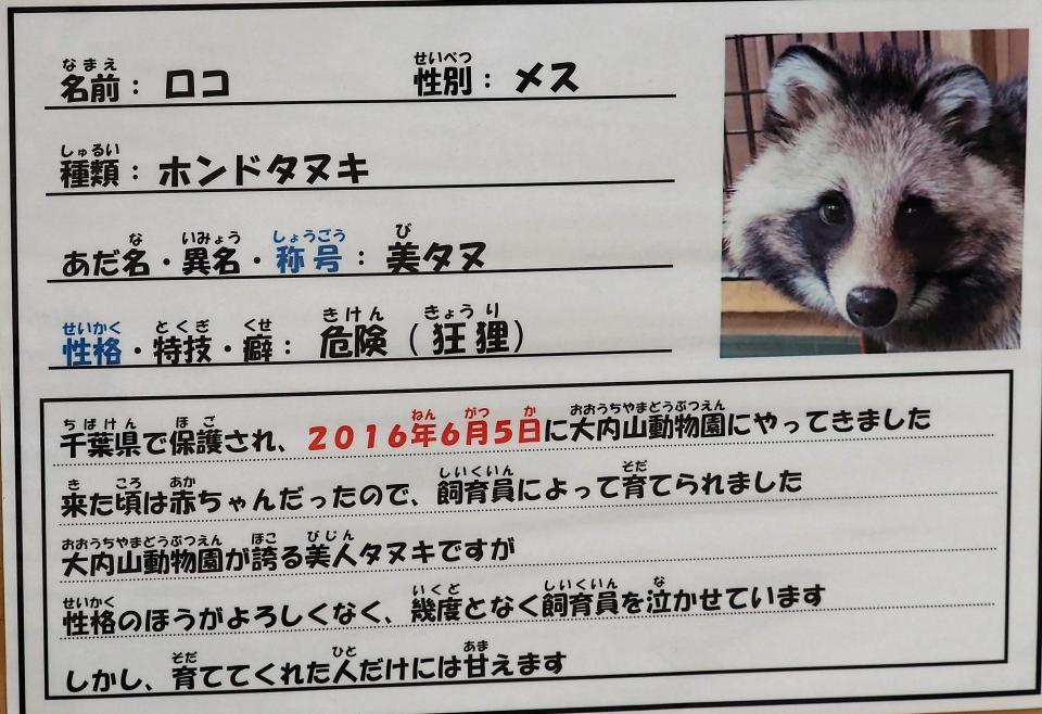 ホンドタヌキのロコちゃん・美人狸・狂狸